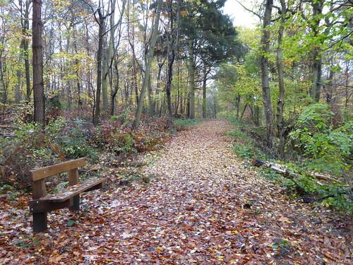 Bishop's Wood Nature Reserve
