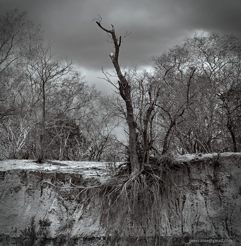 tree tanzania erosion selous