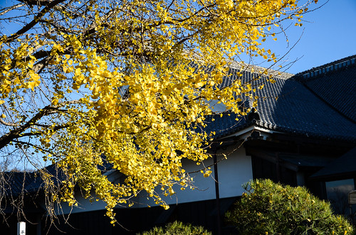 kumamoto2015-89