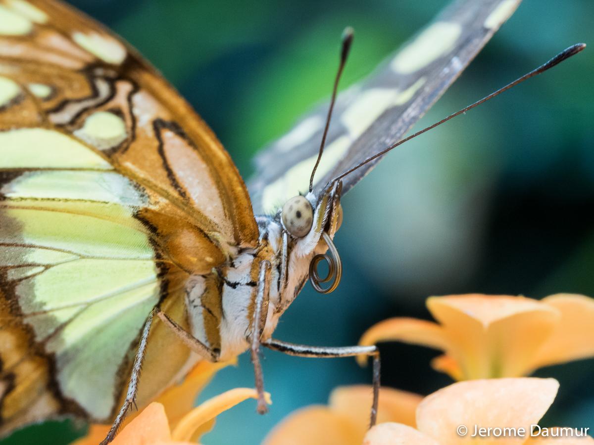 Butterflies Garden 3