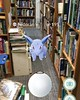 #pokemongo in @dicksonstbooks