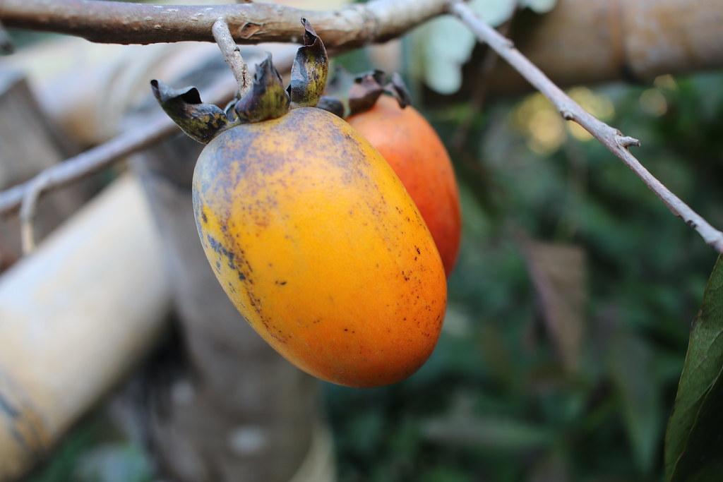 新埔味衛佳柿餅 (8)