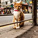 Hong Kong Cat by Mario Sixtus