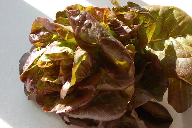 1 individual lettuce