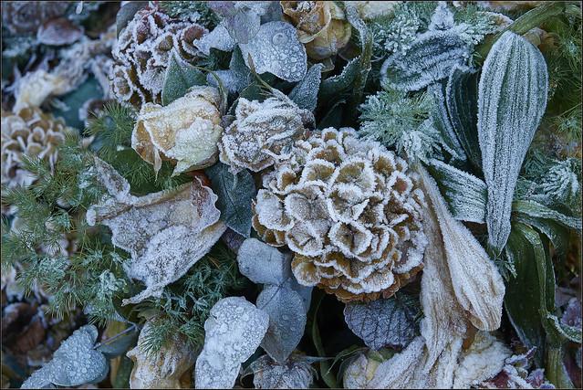 Frozen bouquet  (in Explore)