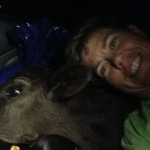angus farm farming alabama farmer calf farmlife bullcalf anguscalf hazelgreenal mcgeefamilyfarm