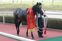 Active Minoru - 29th The Centaur Stakes - Hanshin Racecourse