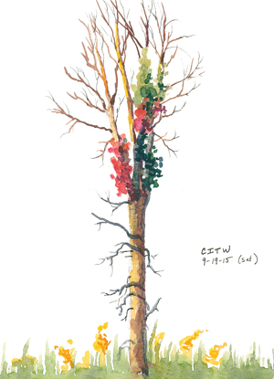 20150919_citw2_autumn_tree_w