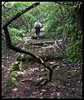 Forest Stairway to Connaught Point by Indianature16