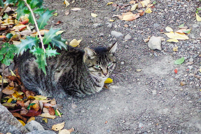 Today's Cat@2015-10-31