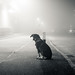 Foggy Doggy | Day 95 / 365 ... Part II