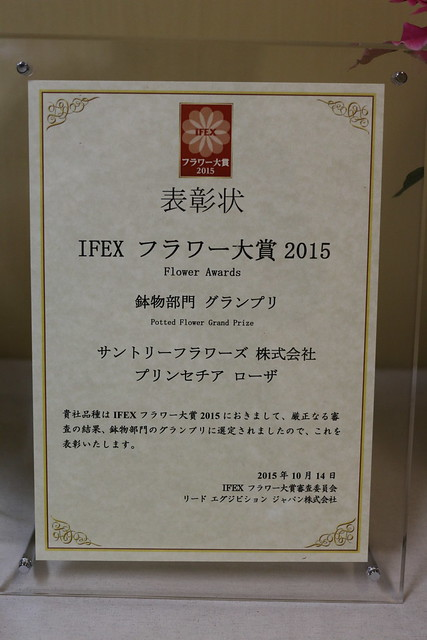 国際フラワーEXPO2015フラワー大賞受賞 バラ咲き プリンセチア プリンセチアローザ サントリーフラワーズ