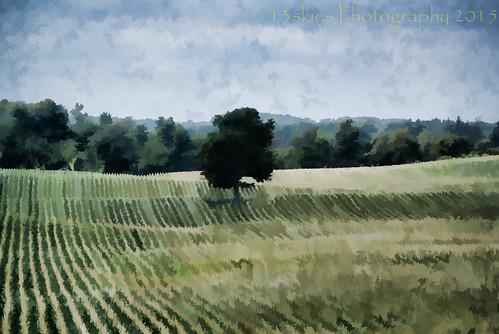 tree green look field painted country comfort paintedlook