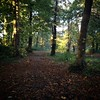 There are two #vizslas in there on our Autumn walk today #vizsla #vizslagram #vizslalove #vizslasofinstagram #wirehairedvizsla