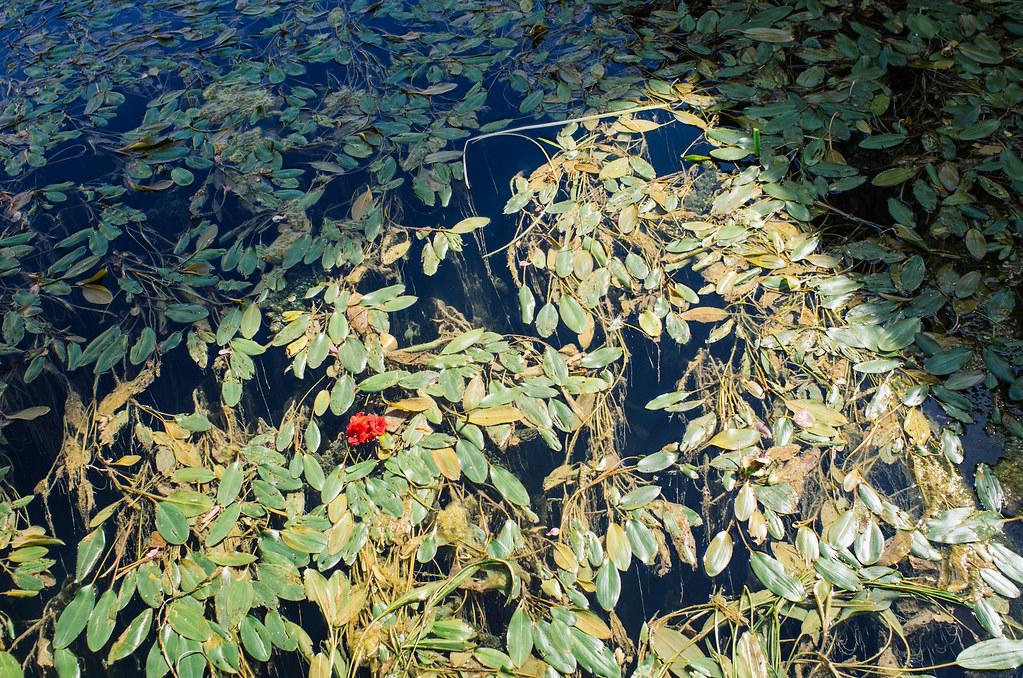 Balade gastronomique dans l'Yonne - Un peu de rouge