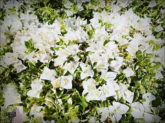 2016-11-02_PB020073_Botanical Gardens,Largo,Fl