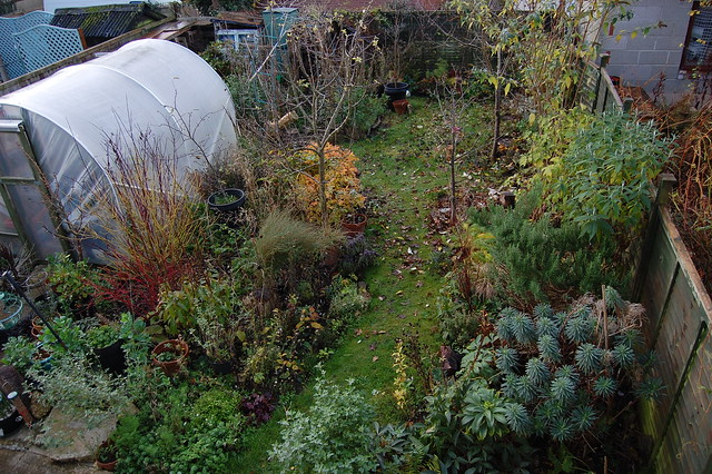 Looking Down on the Back Garden - November 2016