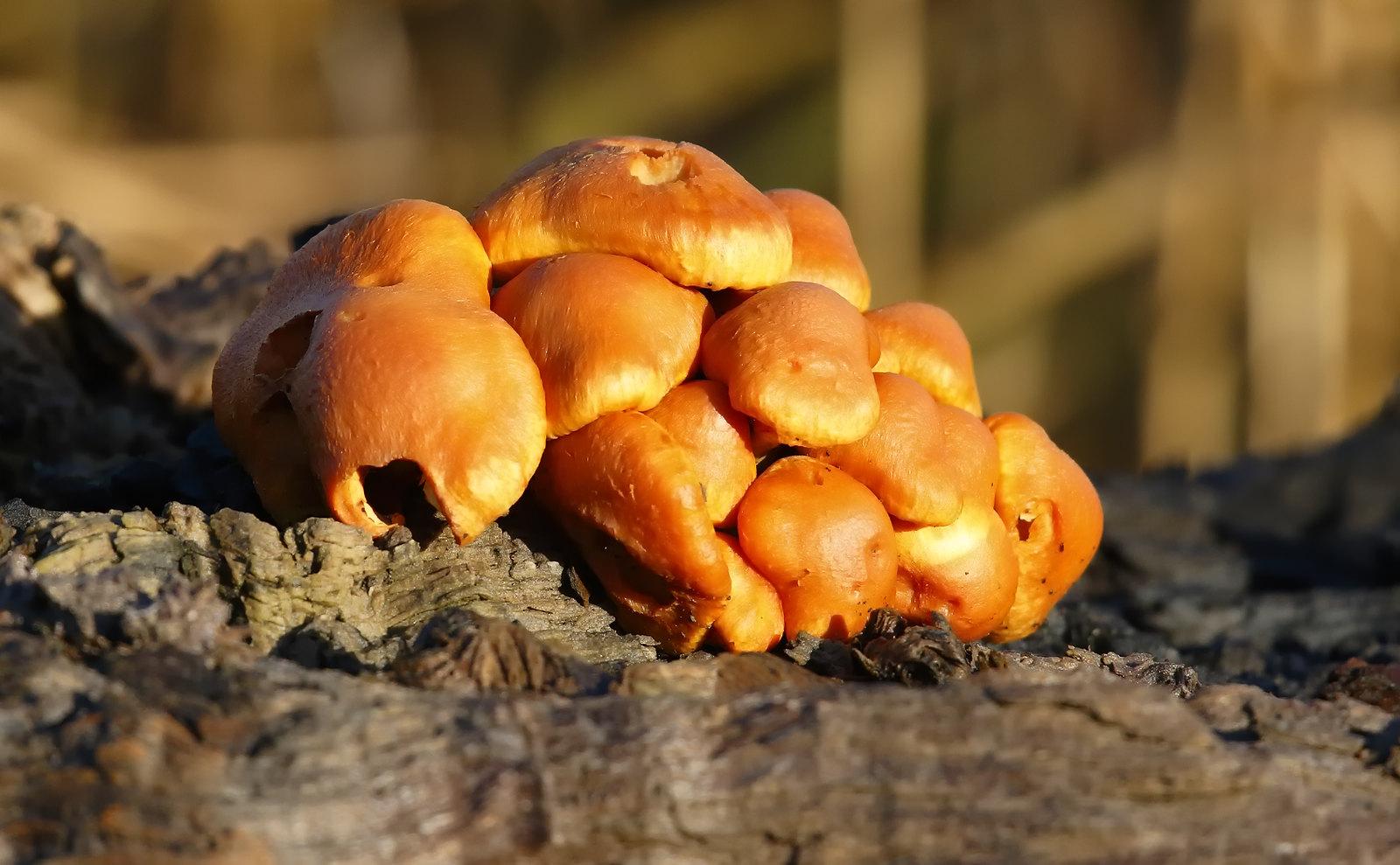 Fungus sp?