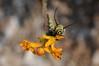 tasty flowers by ladybugdiscovery