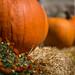 pumpkin 09242015 (4 of 5) by chrishowardphotography.com