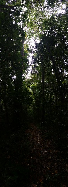 I - How dark is it in a tropical rainforest? Mount Bartle Frere