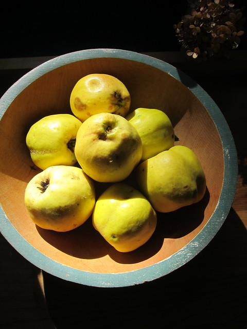 Late Harvest: A Gift of Quince