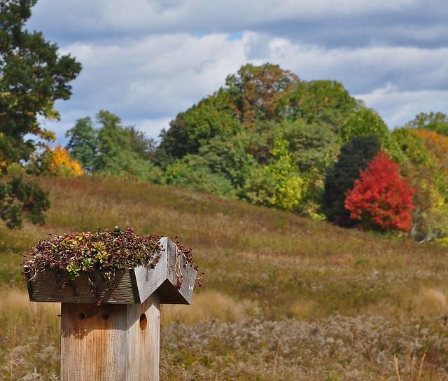 Meadow Garden - Green Roof