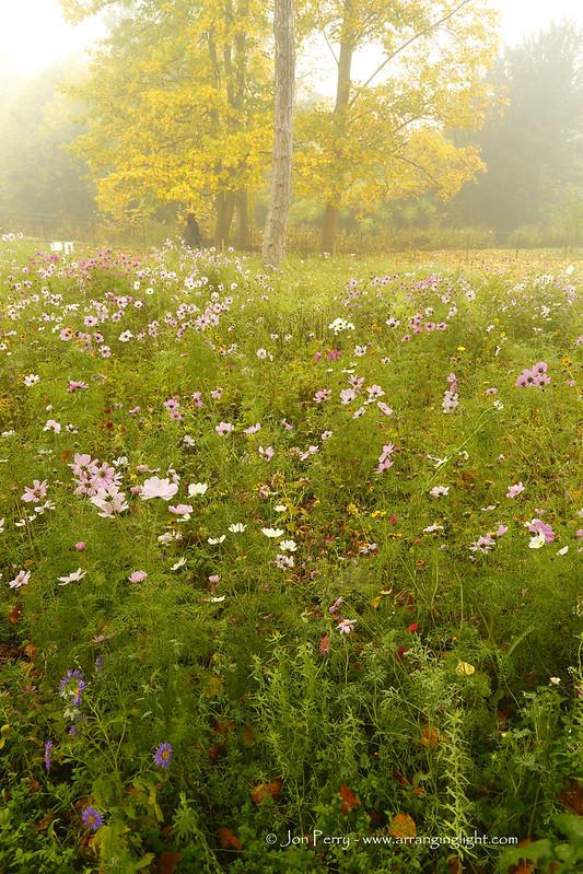 _C0A4790REWS Autumn Above the Meadow, Jon Perry - Enlightenshade, 1-11-15 zao