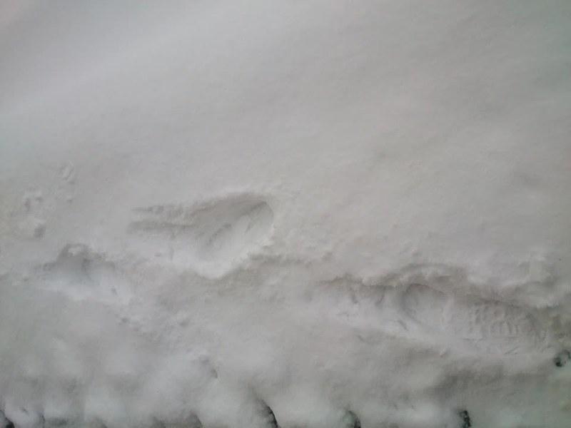 El silencio de ALMAGUA - El silencio del invierno (Pinares-Soria)