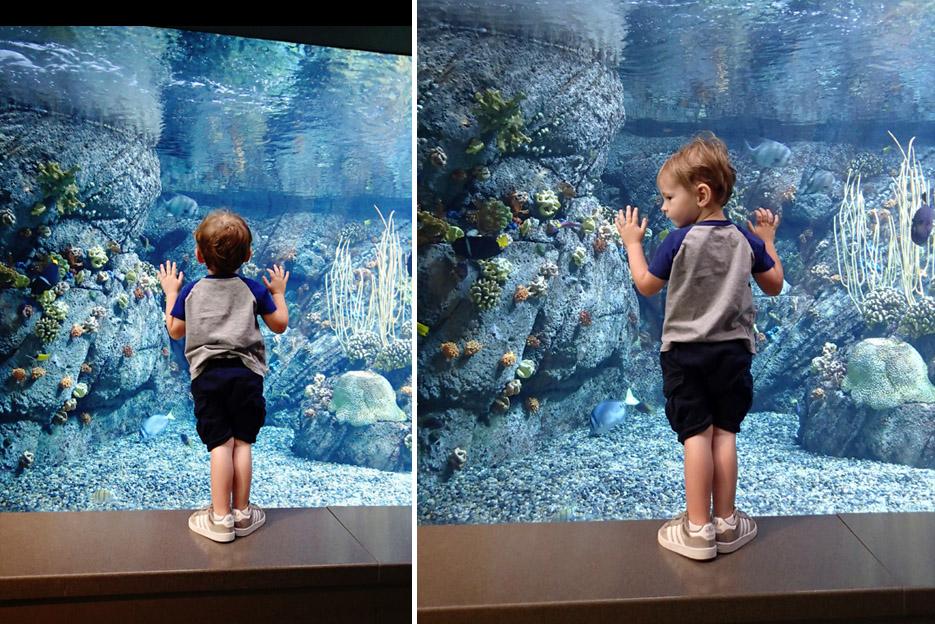 082115_aquarium02