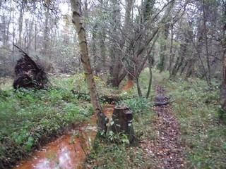 Path through Flitwick Moor