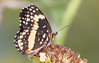 Bordered Patch