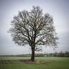 Nailstone Oak_320