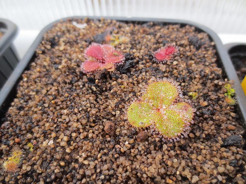 Plantas.werds.2012-2013 - Página 8 23380745013_22ca2b0e23_c