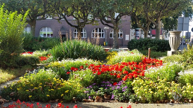 Florale Überraschung in Oberhausen