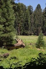 Sequoia National Park Trip