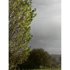 Pioggia assolata al parco della Cesanella di #senigallia #pioggia #rain #raccontidimarche #vivomarche #vivo_italia #volgomarche #volgoitalia #marcheforyou #marchetourism #destinazionemarche #igersmarche #ig_marche #ig_italia #ig_europe #raindrops #photoof