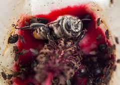 secret bee rituals
