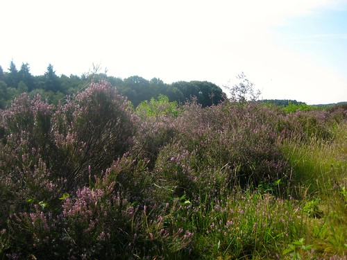 Heather-trees