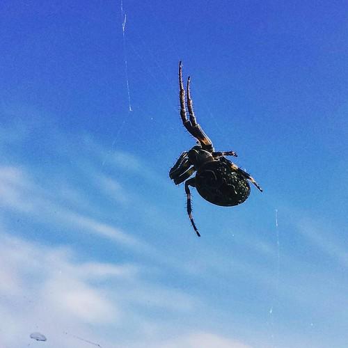 Spider II. #spider #arachnid