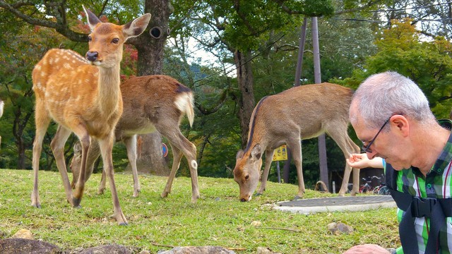 Deer at Wakakusayama