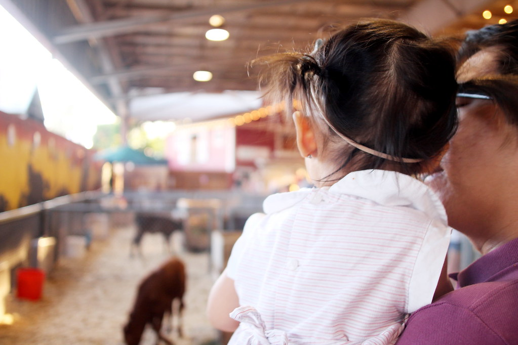 la county fair 2015