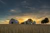 Kickapoo Soy Field by Graham J Green