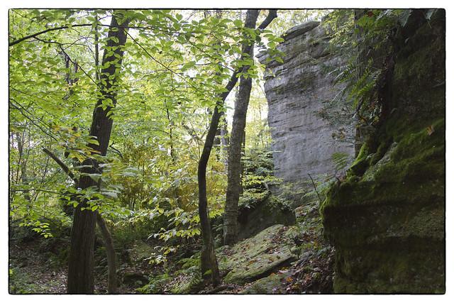 IMG_6805 Rocks and Beech