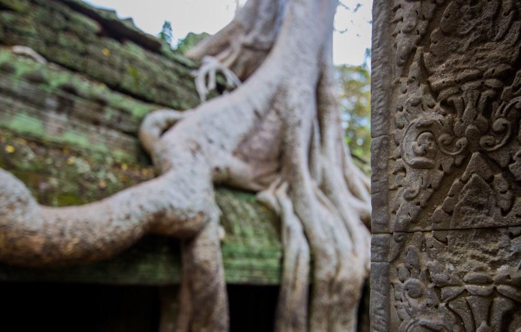 Ta Prohm Angkor-2857