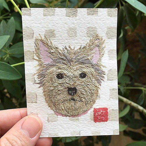 Paper Art Collage - Yorkie