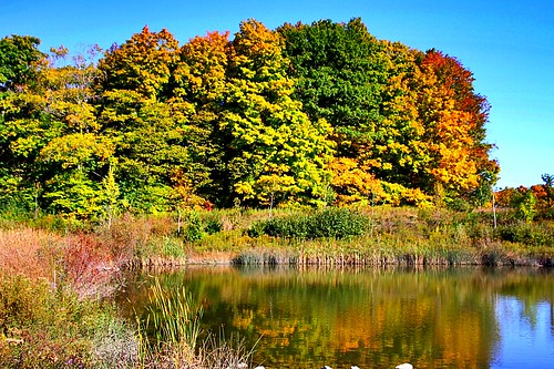 autumnlandscape beautifulday bluesky scenics landscape water pond trees fallcolours reflections autumn ccphotoworks