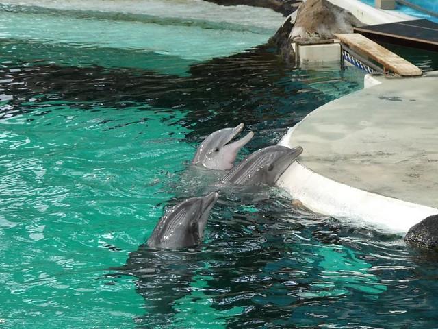 Delfine, Zoo Duisburg