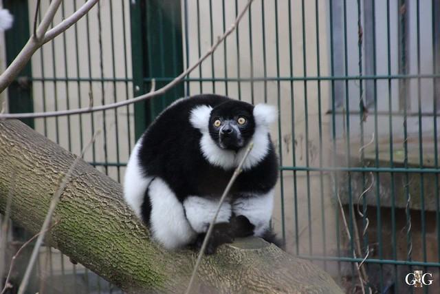 1. Feiertag im Tierpark Berlin44