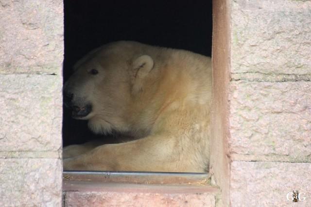 Besuch Zoo Rostock 29.12.201555